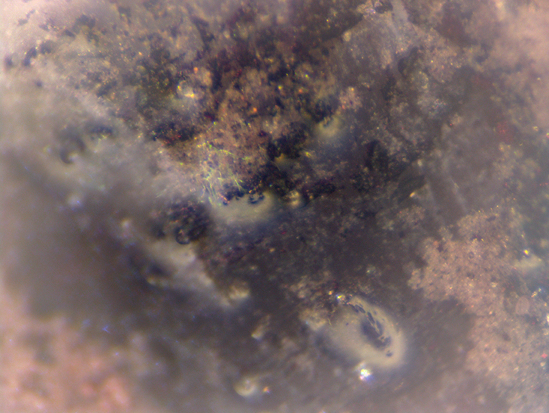biofilm_replastic_bond_microscope